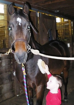 Boy Brushing Pony, Horse Breeding And Lessons