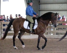 Teenager on Horseback, Horse Breeding and Lessons