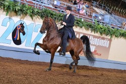 Man Riding Show Horse, Equine Farm