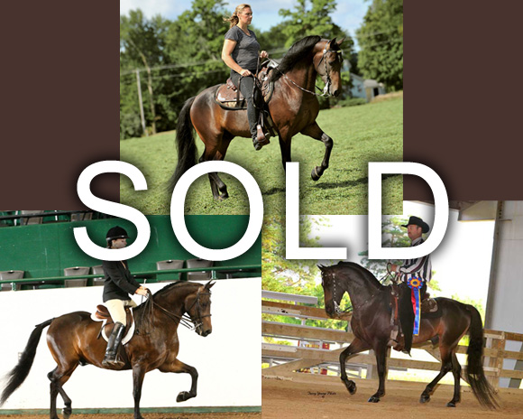 Sold Image, Equine Farm