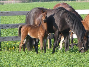 Two Horses and a Foal, Equine Farm